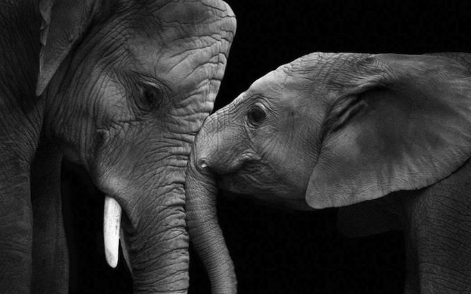 портреты животных фото 8 (680x425, 138Kb)