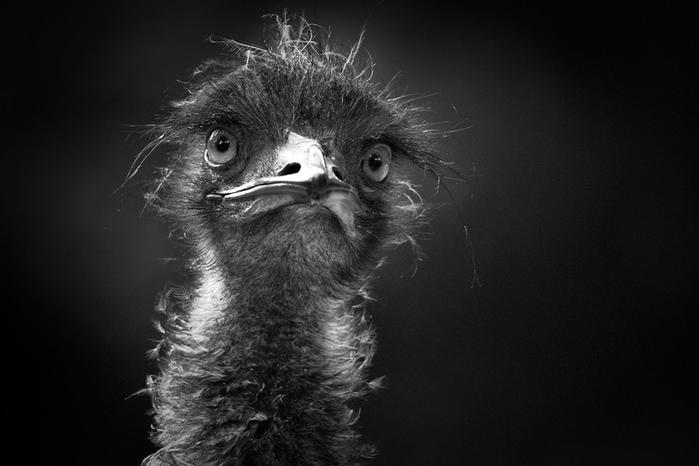 портреты животных фото 9 (700x466, 154Kb)