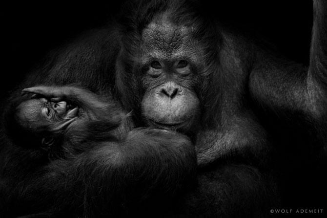 портреты животных фото 14 (670x446, 79Kb)
