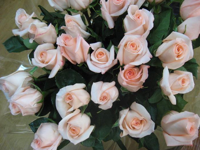 розы 3 (700x525, 111Kb)