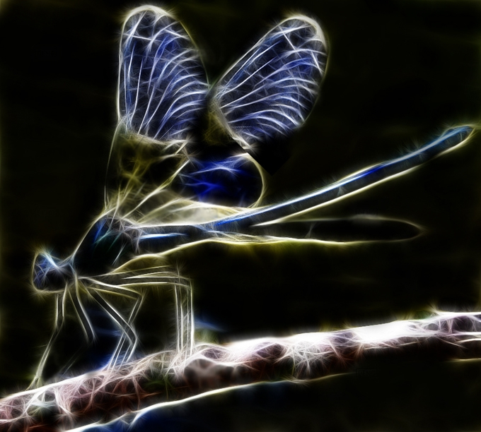 106172232_large_fractal_dragonfly_by_minimoo64d3b561w (680x612, 331Kb)