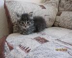 ������ Котенок МУ�-1мес.Солнцево видео,фото 002 (700x563, 382Kb)