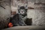 ������ Котенок Мурр 1мес. Солнцево 008 (700x466, 201Kb)