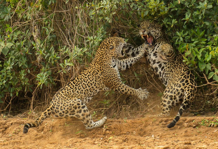 фотографии дикой природы (700x478, 494Kb)