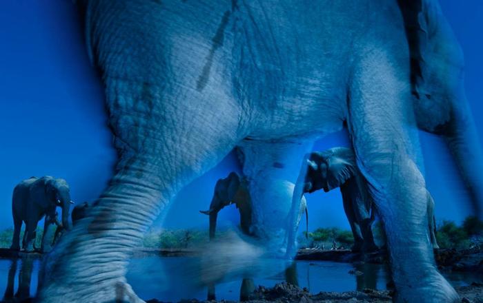 фотографии дикой природы 8 (700x440, 307Kb)