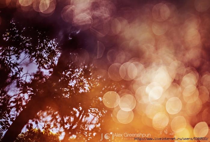 the_dreaming_tree_by_alexgphoto-d6brhmc (700x473, 274Kb)
