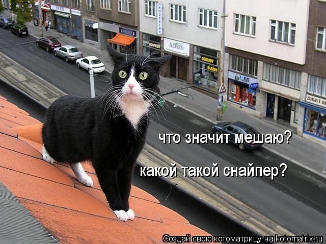 kotomatritsa_2B (640x480, 159Kb)