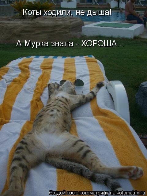 kotomatritsa_3i (480x640, 119Kb)