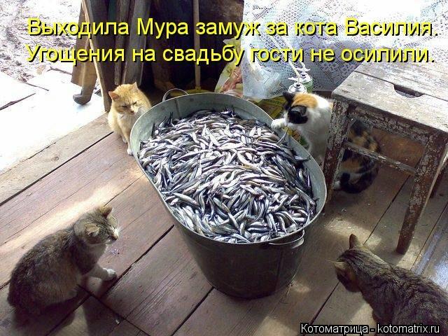 kotomatritsa_61 (640x480, 225Kb)