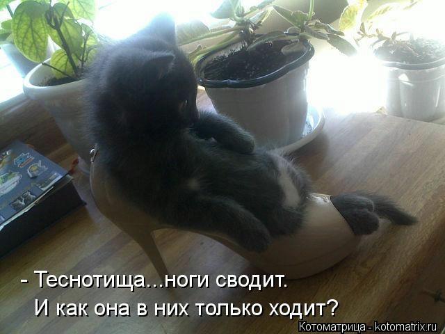 kotomatritsa_i-e (640x480, 110Kb)