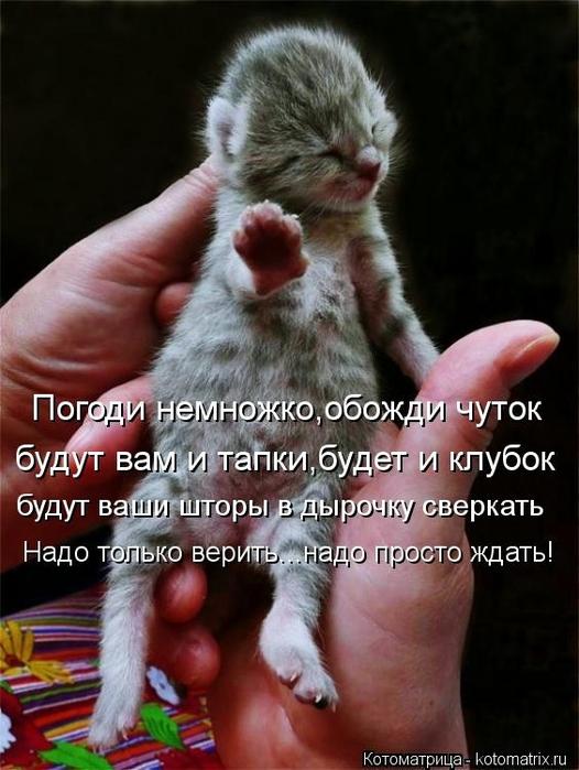 kotomatritsa_OI (526x700, 232Kb)