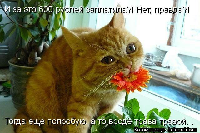 kotomatritsa_wy (640x426, 147Kb)