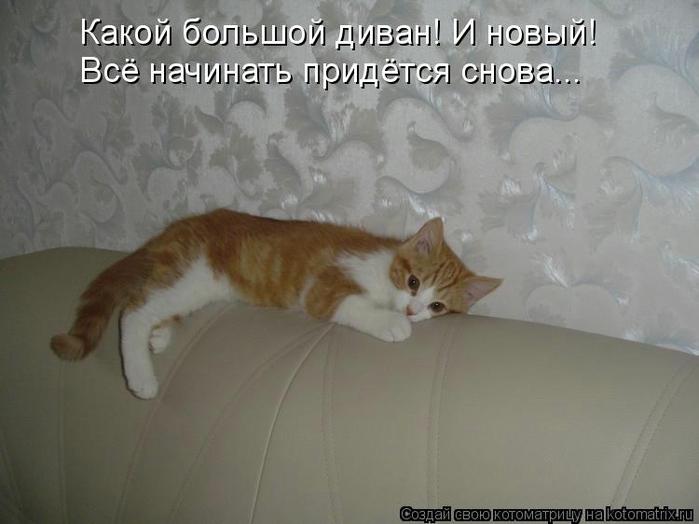 kotomatritsa_Xi (700x524, 175Kb)