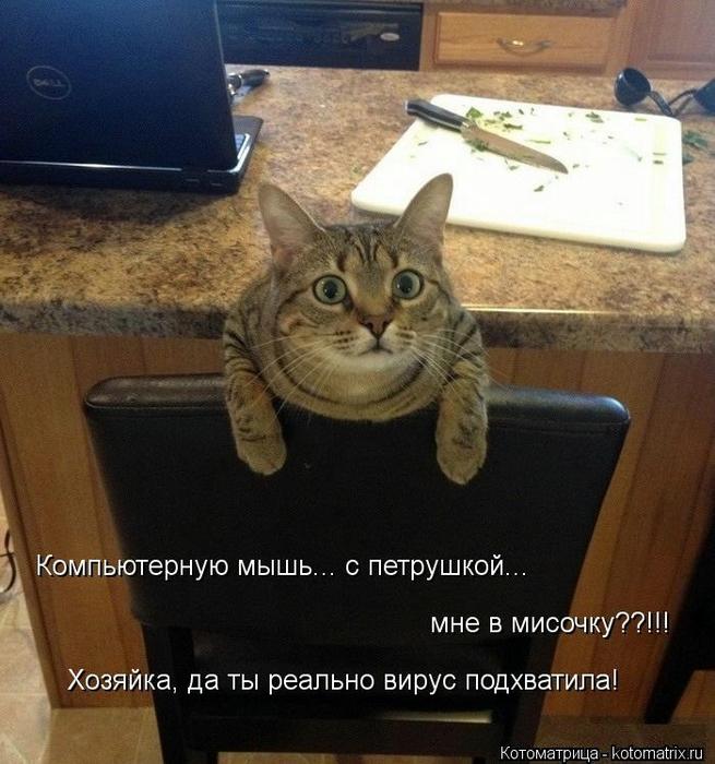 kotomatritsa_ZN (655x700, 305Kb)