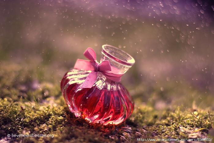 bokeh_rain_by_lieveheersbeestje-d6qvysd (700x466, 256Kb)