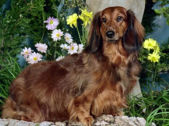 3180456_dog (550x412, 77Kb)