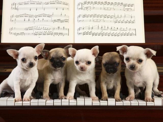 Animals_Dogs_Musicians_dogs_013709_29 (640x480, 205Kb)