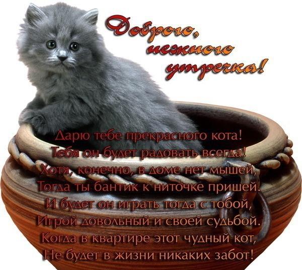 дарю котёнка (600x537, 105Kb)