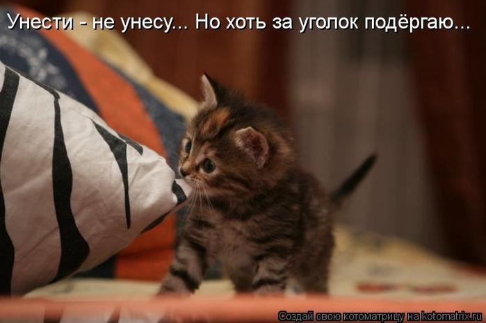 kotomatritsa_2b (700x465, 159Kb)