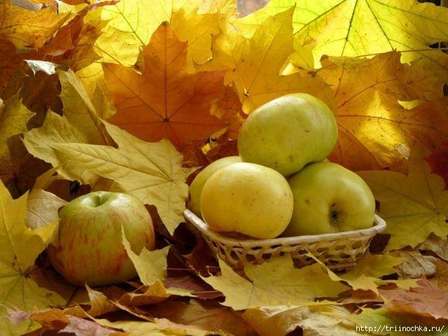 Натюрморты с осенними яблоками!