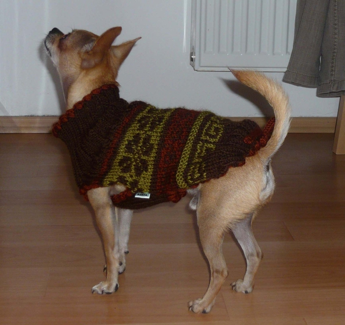 Вязанье для собачек (16) (700x658, 281Kb)