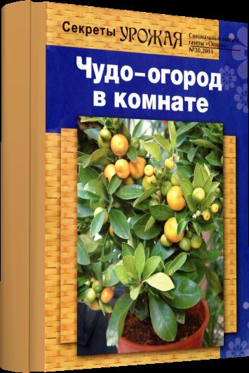 3726595_newprojectzh (355x532, 317Kb)