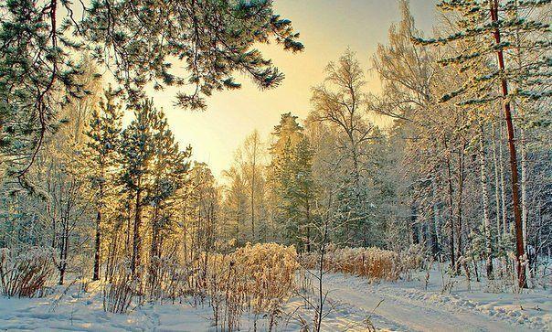 зимний лес, Сибирь, Россия, (604x363, 98Kb)