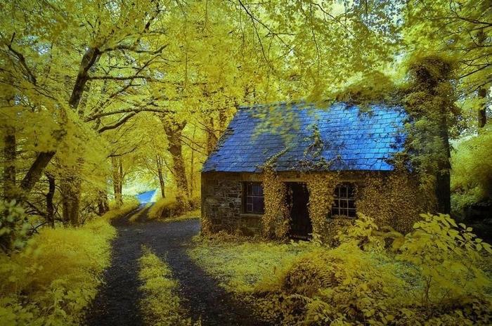 дом в лесу фото 6 (700x464, 326Kb)