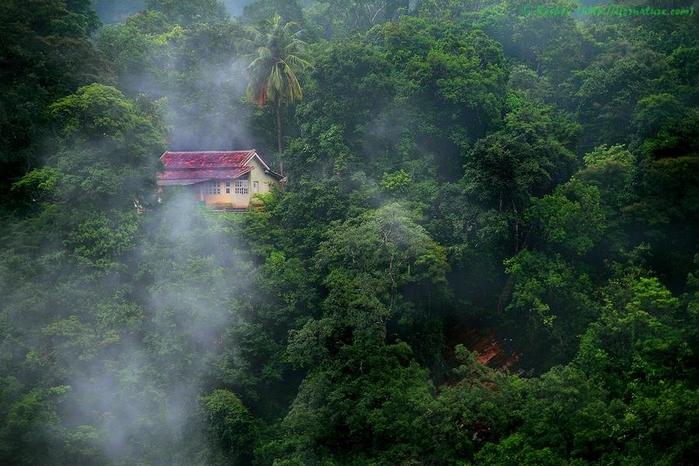 дом в лесу фото 8 (700x466, 276Kb)