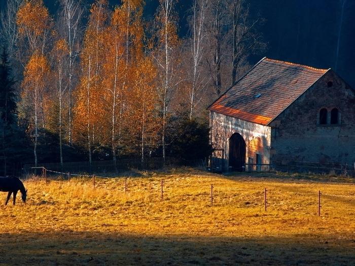 дом в лесу фото 13 (700x525, 344Kb)