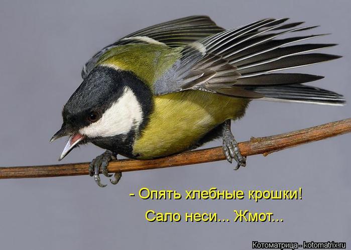 смотрите также птицы вороны или клетки для птицы.  5055 Дарэлл Купалка для птиц.