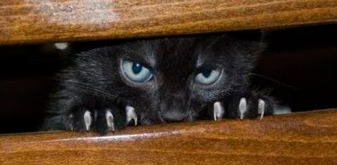 cat (487x239, 44Kb)