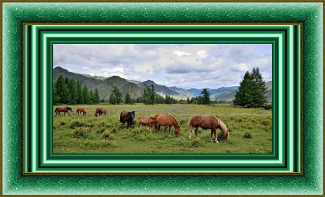 лошадки (640x388, 434Kb)