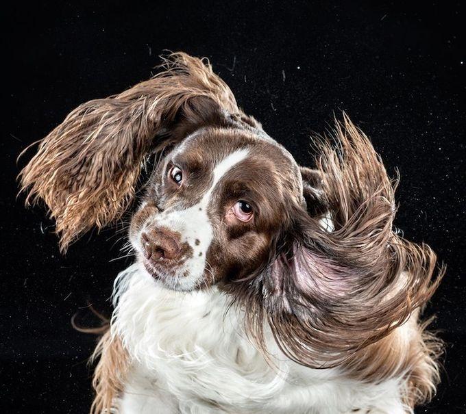 смешные фото собак 2 (680x605, 239Kb)