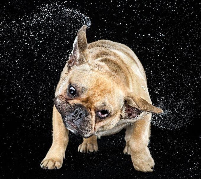 смешные фото собак 10 (680x605, 286Kb)