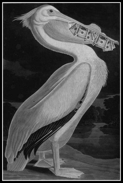 Magic-Pelican (471x700, 97Kb)