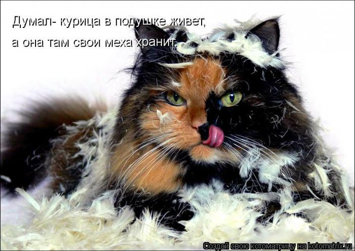 kotomatritsa_4P (700x494, 63Kb)