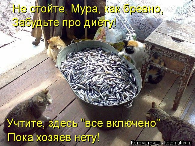 kotomatritsa_d (640x480, 242Kb)