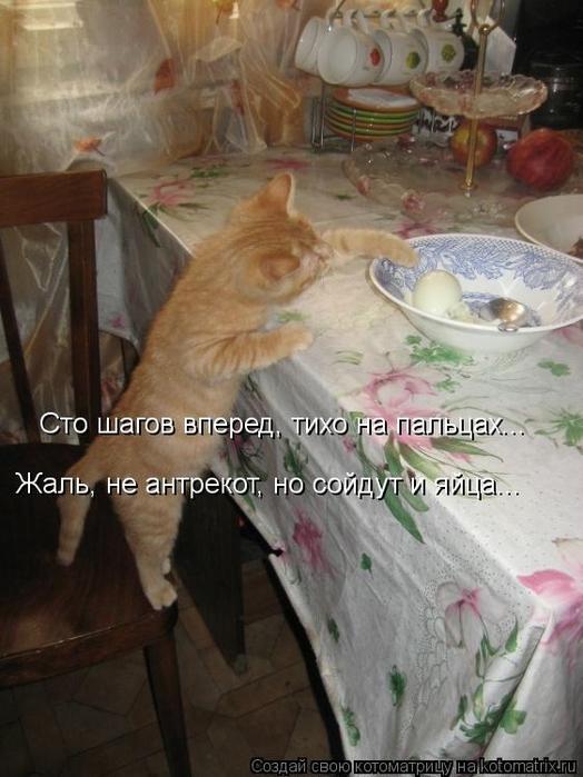kotomatritsa_pO (524x700, 242Kb)