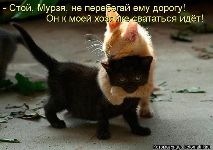 kotomatritsa_Qc (700x492, 216Kb)