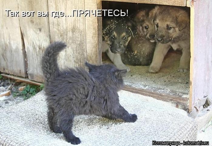 kotomatritsa_RF (700x483, 255Kb)