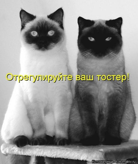 kotomatritsa_uy (591x700, 181Kb)