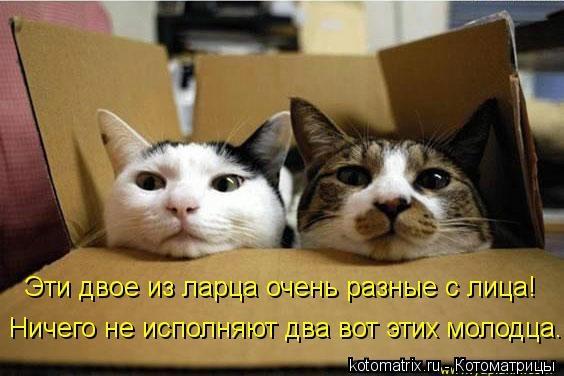 kotomatritsa_XS (564x376, 101Kb)