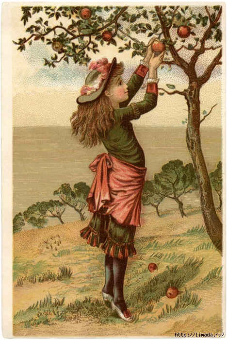 Vintage-Apple-Picking-Image-GraphicsFairy-685x1024 (468x700, 342Kb)