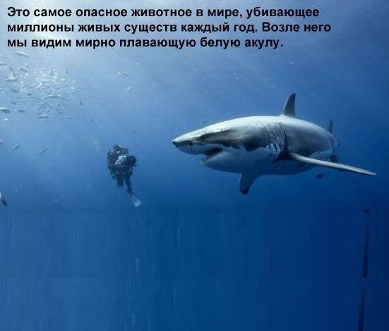 3821971_akyla_4 (551x470, 23Kb)