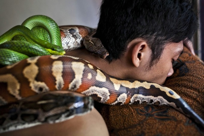 массаж змеями фото 6 (680x453, 151Kb)