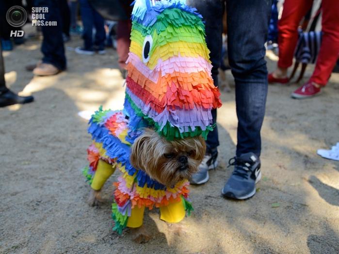 прикольная одежда для собак 2 (700x524, 277Kb)