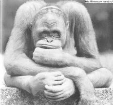 monkey (232x217, 8Kb)