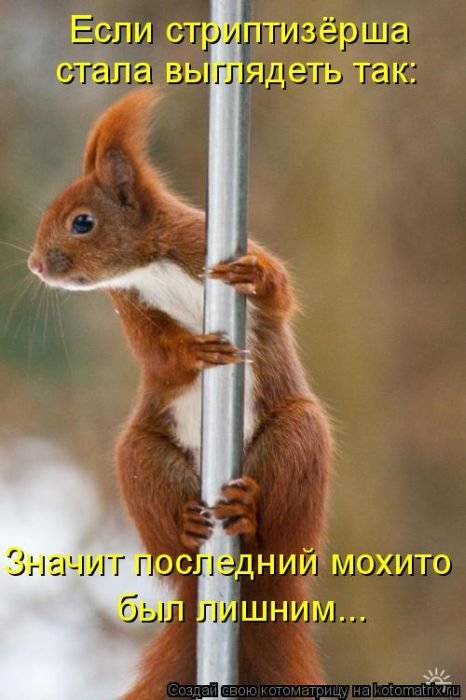 3201191_1289541899_202_kotomatrix_44 (466x700, 54Kb)