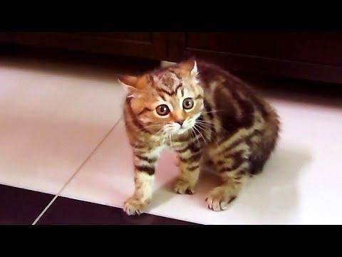 Кошачий танец на Хэллоуин. Halloween Cats -  Dance of  Intimidation